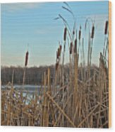 Cattails At Skymount Pond Pa Wood Print