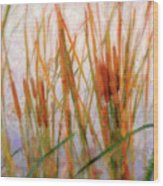 Cattails By The Lake Wood Print