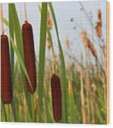 Cattails Delight Wood Print