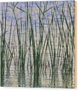 Cattails In The Lake Wood Print