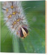 Catterpillar In Close Up 2 Wood Print