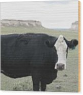 cattle at Pawnee Butte Colorado Wood Print