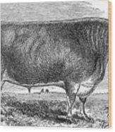 Cattle, C1880 Wood Print by Granger
