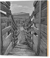 Cattle Chute Wood Print