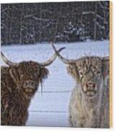 Cattle Cousins Wood Print