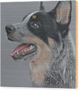 Cattle Dog Wood Print