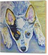 Cattle Dog Puppy Wood Print