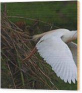 Cattle Egret Begins Flight With Nest Materials - Digitalart Wood Print