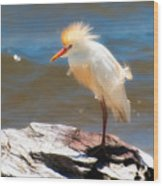 Cattle Egret In Breeding Plumage Wood Print