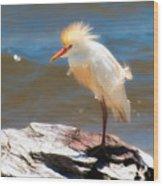 Cattle Egret In Breeding Plumage Wood Print