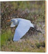 Cattle Egret In Flight Wood Print