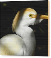 Cattle Egret In Shadow Wood Print
