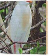 Rainbow Bill Cattle Egret Wood Print