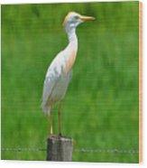 Cattle Egret On Post Wood Print