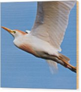 Cattle Egret On The Wing Wood Print