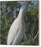 Cattle Egret Pose Wood Print