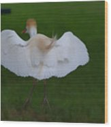 Cattle Egret Prepared For Landing - Digitalart Wood Print