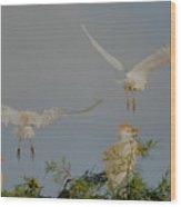 Cattle Egrets At Treetop Wood Print
