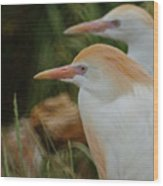 Cattle Egrets Dry Brushed Wood Print