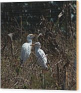 Cattle Egrets In A Pasture Wood Print