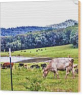 Cattle Farm Wood Print