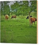 Cattle Grazing In A Lush Pasture Wood Print