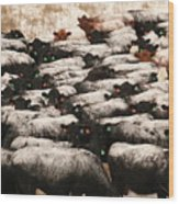 Cattle With Snow On Their Backs Wood Print