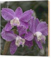 Cattleya Loddigesii Var. Puntata  'marisa 3'  0831 Wood Print
