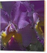 Cattleya Orchid Garden Of Eden Maui Wood Print
