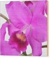 Cattleya Orchid Wood Print by Lynn Berreitter