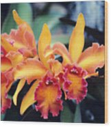 Cattleya Orchids Wood Print by Allan Seiden - Printscapes
