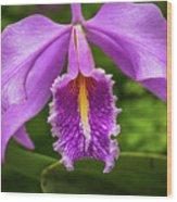 Cattleya Purpurata Wood Print