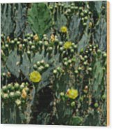 Catus Blossoms Wood Print