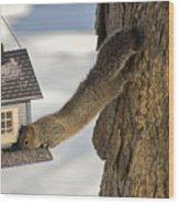 Caught At The Bird Feeder Wood Print