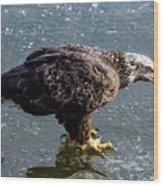 Cautious Eagle Wood Print
