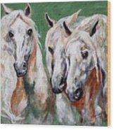Cavalia Wood Print