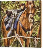 Cavalry Horse Circa 1864 Wood Print
