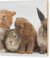 Cavapoo Pup, Rabbit, Guinea Pig Wood Print