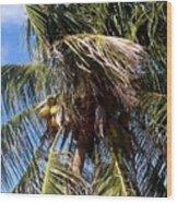 Cayman Palm Wood Print