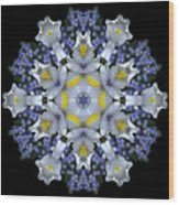Ceanothus Iris Medley 1 Wood Print