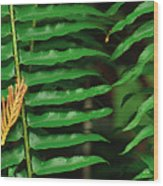 Cedar And Fern Wood Print