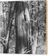 Cedar Fence Post Wood Print