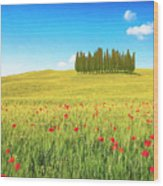 Cedar Grove And Poppies Wood Print