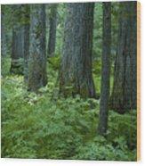 Cedar Grove Wood Print