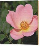 Cedar Key Rosa Canina Wood Print