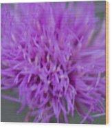 Cedar Park Texas Purple Thistle Wood Print