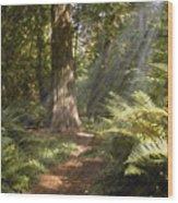 Cedar Path Wood Print