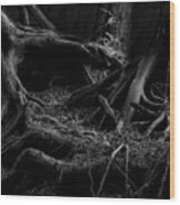 Cedar Roots Black And White Wood Print