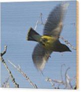 Cedar Waxwing In Flight Wood Print