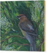 Cedar Waxwing In Lilac Wood Print